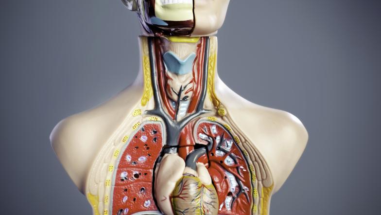 Organsystem