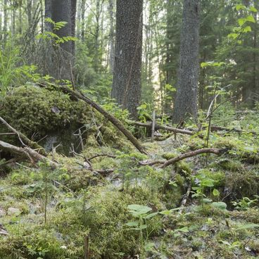 Naturskogen