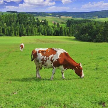 Kött och klimat