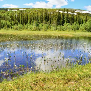 Sjön som ekosystem